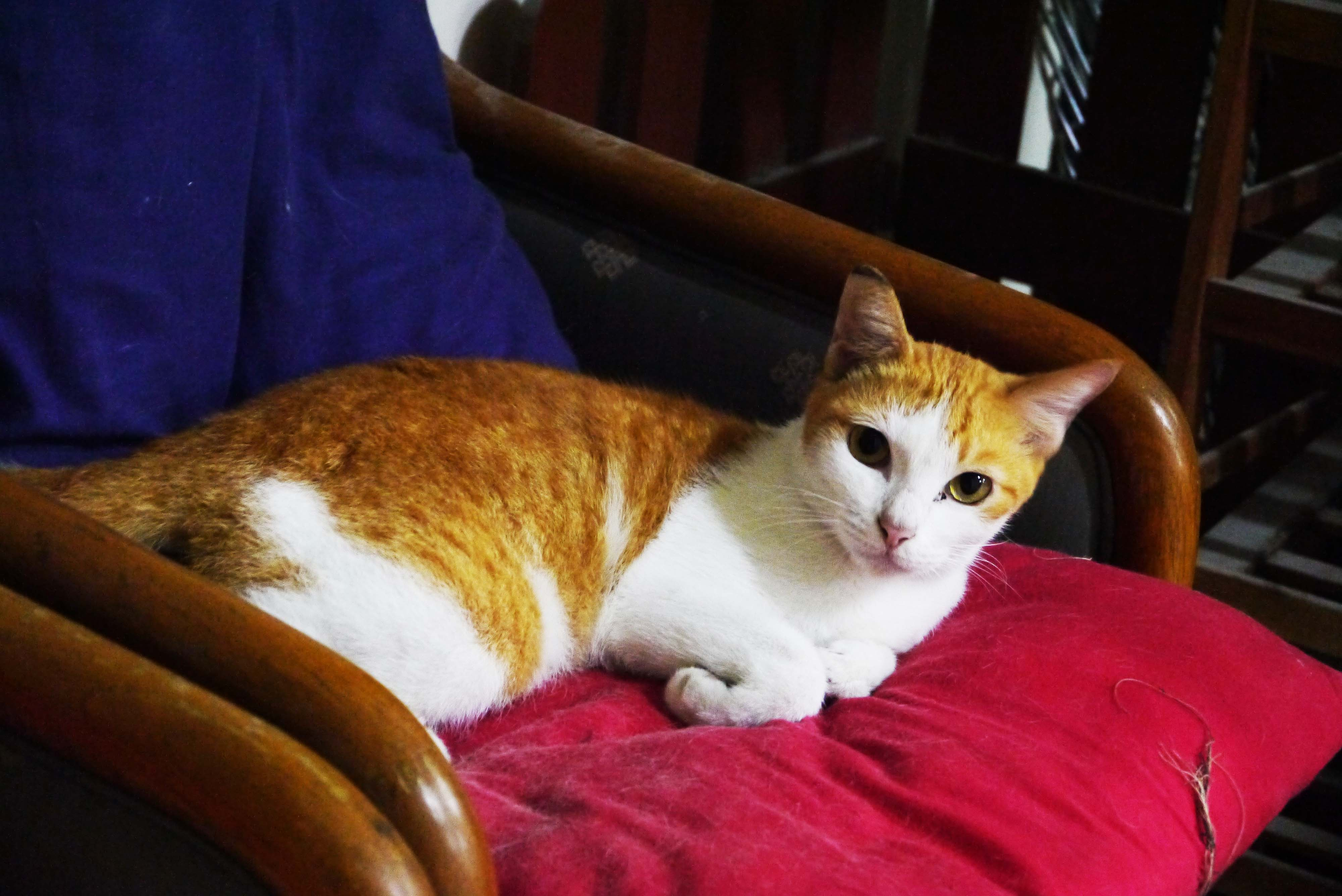 Kucing Storitie