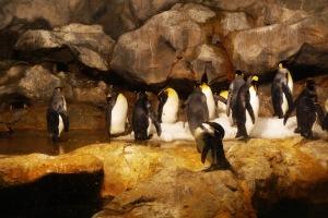 rapat keluarga penguin